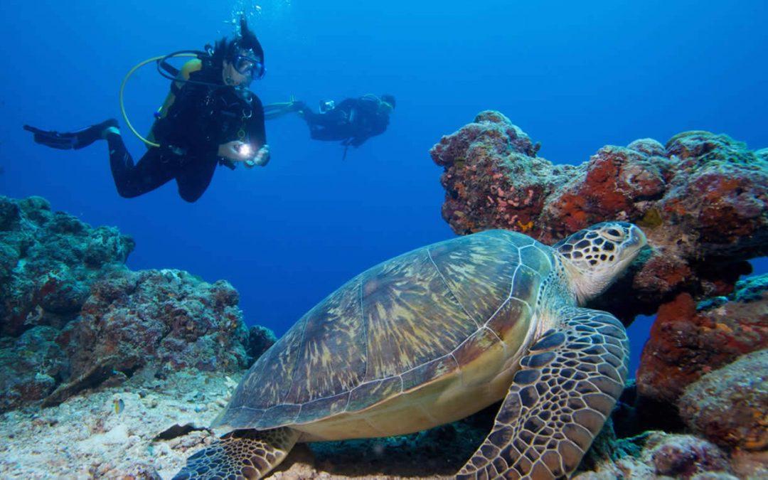 Maldives Diving Holiday